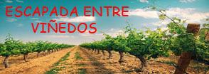 1200px-Viñedo_en_Cariñena copia